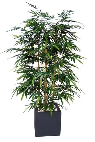 Bamboo Wild Bush